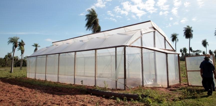 Productores reemplazarían plantaciones de tabaco por frutas, verduras yhortalizas