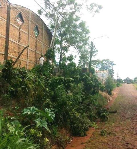 Corte de energía por la caída de ramas sobre líneas de energía en barrioEcológico