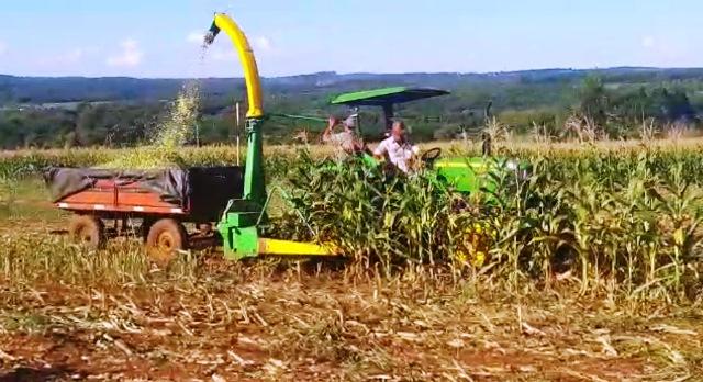 Desarrollarán maíz transgénico de alta productividad en Misiones yCorrientes