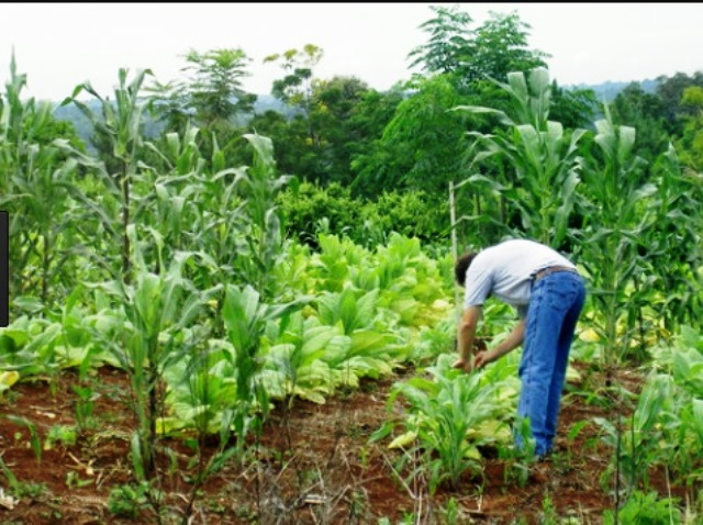 Depositaron 6 millones de pesos para las becas de la Asociación Plantadores deTabaco