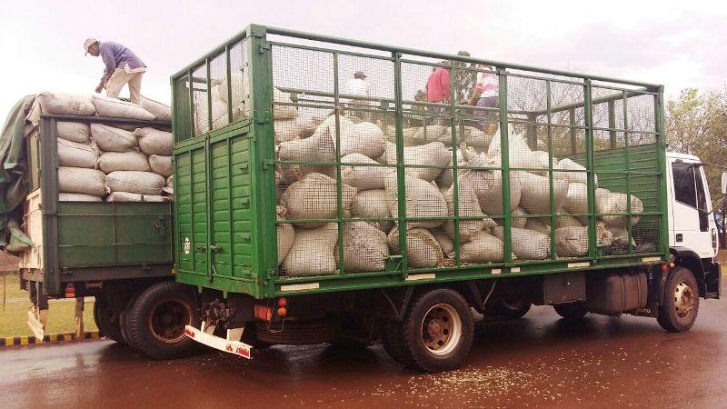 """Misiones importa yerba de Paraguay y Brasil por la baja producción local: """"con el dólar a 120 no podemos fertilizar ni recuperaryerbales"""""""