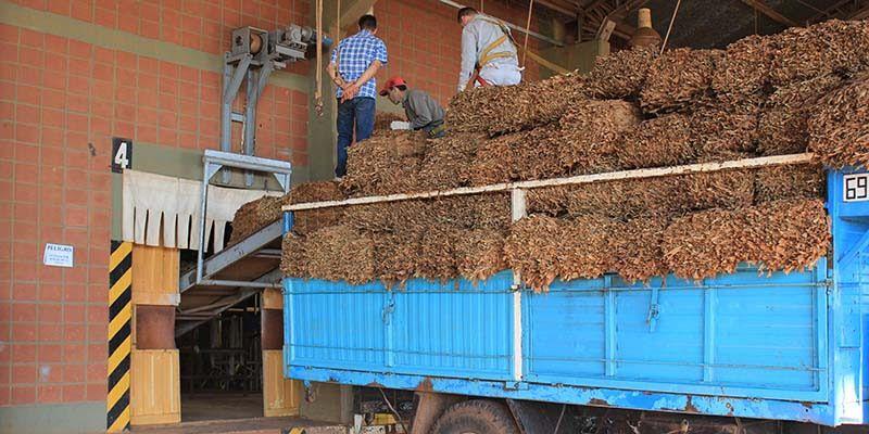 Pagan más de $235 millones a productores tabacaleros segúnDNI