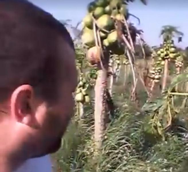 Colonos piden ayuda porque se pudre su producción de mamón y no tienenapoyo