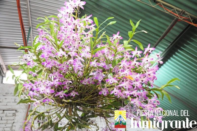 La exposición de Orquídeas recibió a numerosos visitantes durante laFNI2018