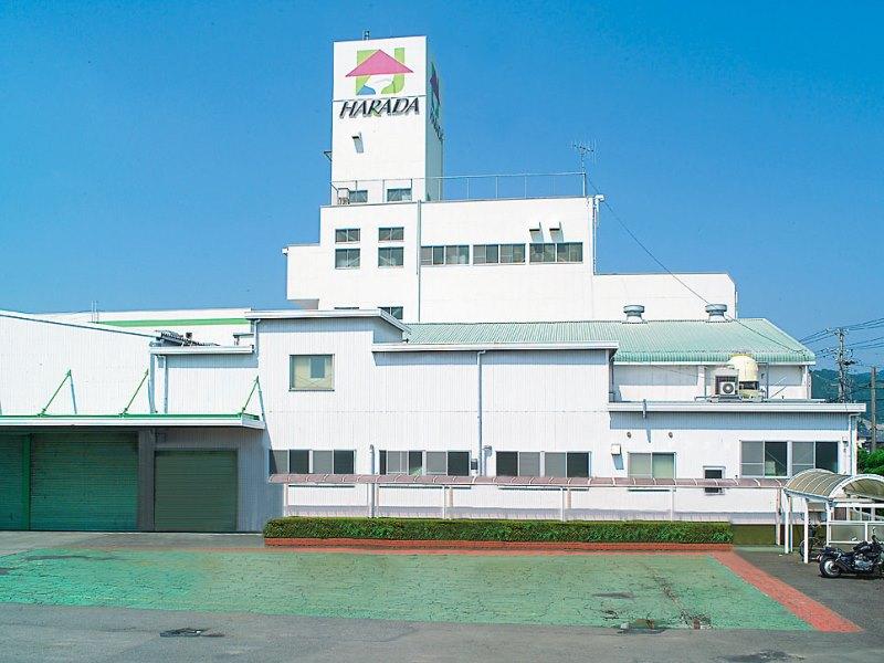 Empresa japonesa instalará un secadero de té verde y matcha en la ZonaCentro