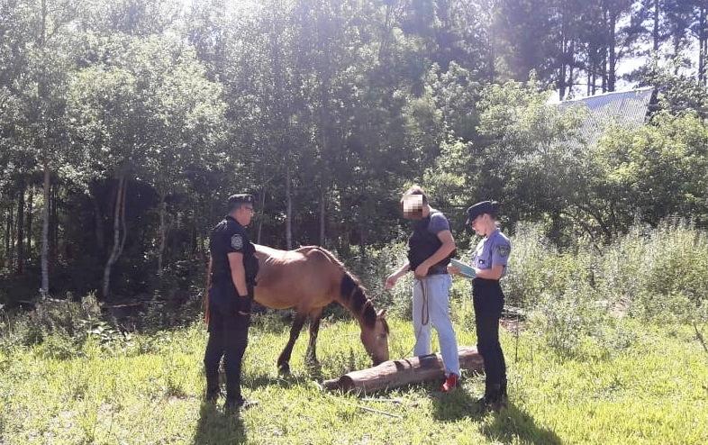 Un sujeto y dos menores detenidos por un caballo robado y carnefaenada