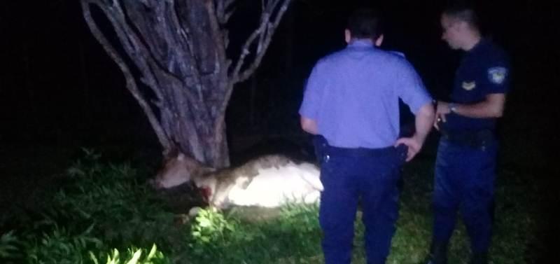 Recuperaron un animal bovino a punto de serfaenado