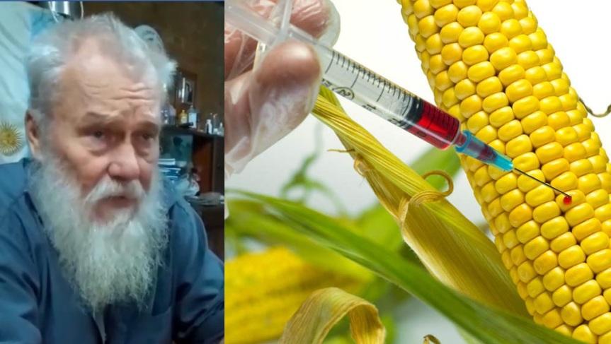 """Maíz transgénico: """"dejaríamos de ser yerbateros para producir granos y alimentar a los chanchos brasileros"""""""