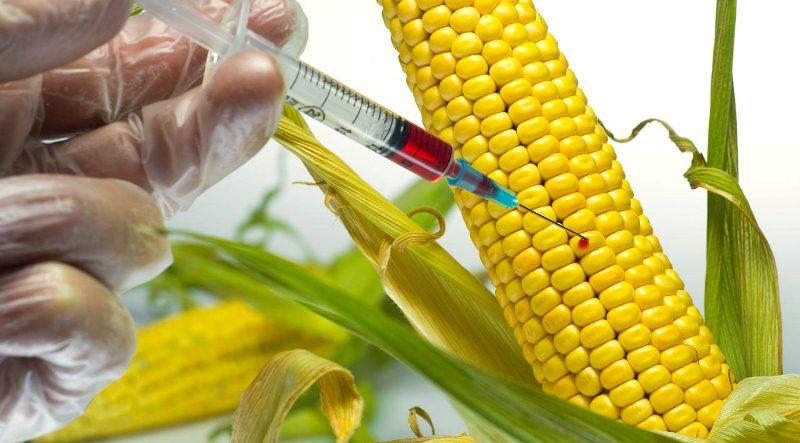 Prohíben modificar genéticamente las semillas nativas y criollas enMisiones