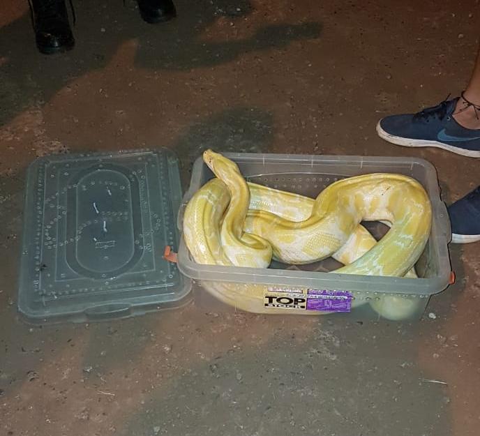 Encuentran serpientes enviadas comoencomiendas