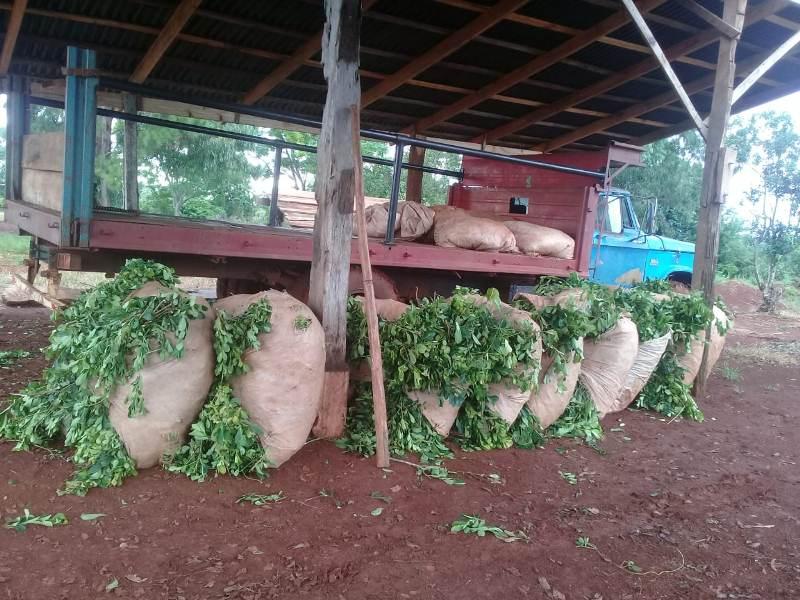 Recuperaron más de 600 kg de hoja de yerba que habían sidorobados