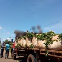 """""""Sino los buscas de la casa, no van a laburar"""": Analizan mecanizar la cosecha por el costo de trasladar tareferos"""