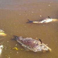 En alerta: ¿están contaminados por los agroquímicos los ríos de la región?