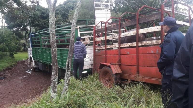 Interceptaron camión con 16 vacunos robados a unagricultor