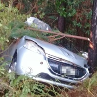 Despistó en la ruta 14 e impactó contra un pino