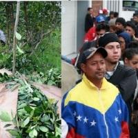 """Pedirán venezolanos para cosechar la yerba: """"No conseguimos tareferos, no quieren laburar, estamos podridos"""""""