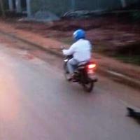 Arrastró a un perro con su moto hasta la muerte