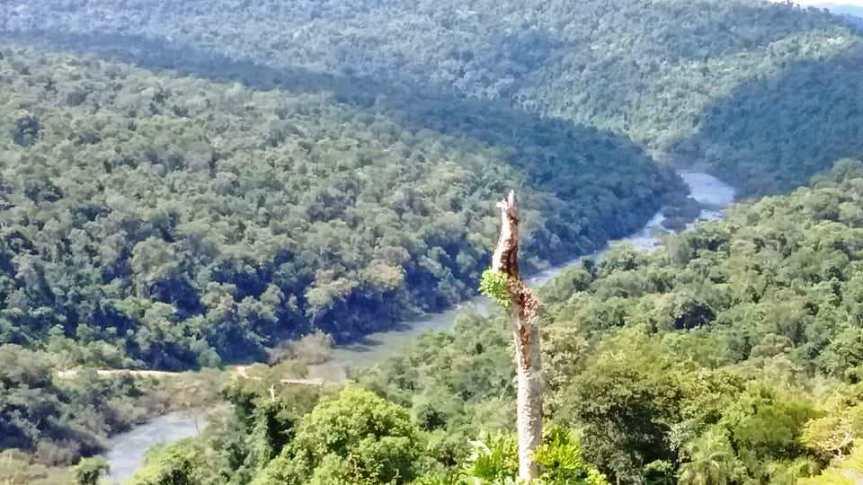 La Argentina recibió 82 millones de dólares de la ONU para proteger los bosquesnativos