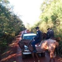 Operativo rural: 1 menor demorado, 5 vehículos y 4 motos secuestradas, 8 licencias retenidas y 21 actas