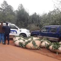Los sorprendieron robando yerba e interceptaron dos camionetas con ponchadas: 5 detenidos y 1000 kg incautados