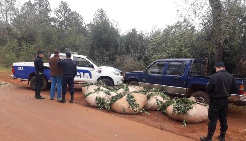 Los sorprendieron robando yerba e interceptaron dos camionetas con ponchadas: 5 detenidos y 1000 kgincautados