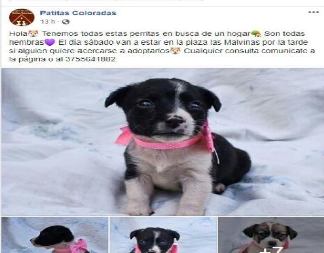 El sábado Patitas Coloradas estará en plaza Malvinas y tendrá cachorros enadopción