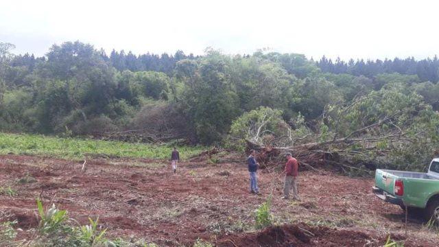 Ecología constató que hay desmonte de 60 has. de bosques nativos en San Pedro y habrá multamillonaria