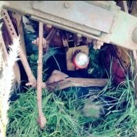 Hombre de 25 años falleció tras el vuelco de un tractor