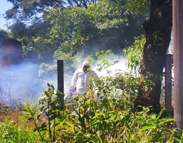 Se realizan fumigaciones y tareas de saneamiento contra el mosquito deldengue