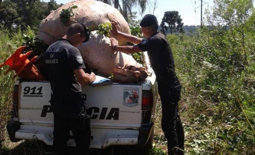 Encontraron 300 kilogramos de yerba robada en unachacra