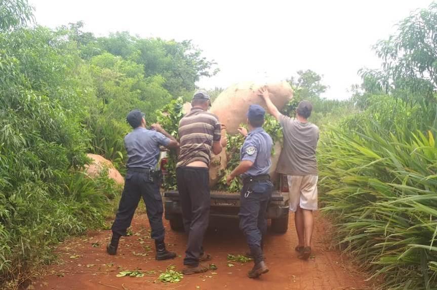 Incautaron 600 kilos de yerba a punto de ser robados de unachacra