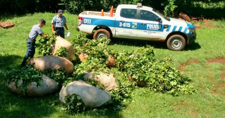 Dos sujetos fueron sorprendidos robando yerba, tenían 800 kilos listos en 10raídos