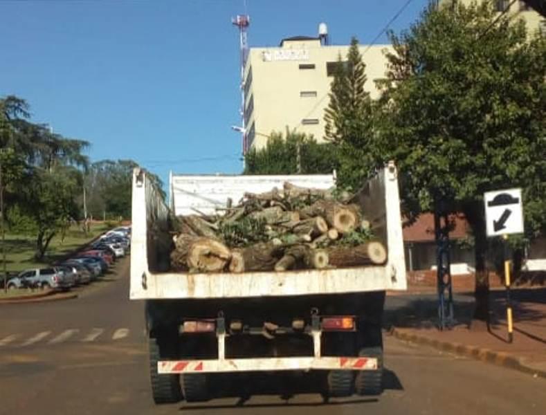 Advierten riesgo por camiones municipales llevando troncos sinseguridad
