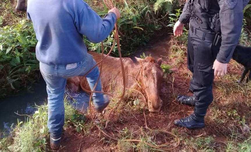 Policías rescataron a un caballo que cayó alarroyo