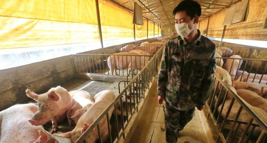 La nueva cepa de la gripe porcina se está propagando a los humanos enChina