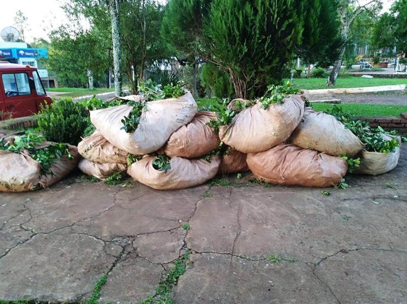 Tres personas fueron sorprendidas cosechando y robandoyerba