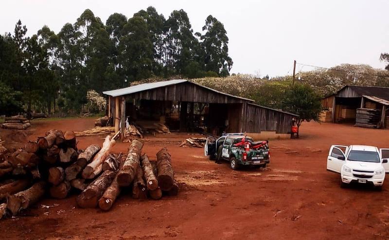 Desarticularon dos campamentos de apeo ilegal de maderanativa