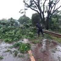 Cayó un árbol sobre la ruta 14 en Campo Viera y se registran cortes de energía en Guaraní, Campo Ramón y Oberá