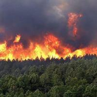 El incendio en la Biósfera Yabotí habría sido causado por ocupantes