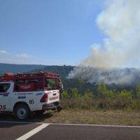 """Yabotí: """"Se quemaron más de 400 hectáreas de monte virgen, se perderán al menos 25 especies"""""""